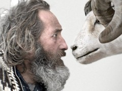 Rams — An Austere Film From Iceland