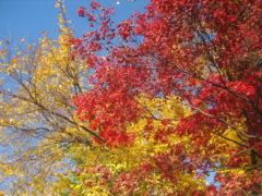 Glorious Autumn Colors Brighten Up A City