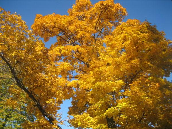 vancouver-toronto-fall-colors-2016-004