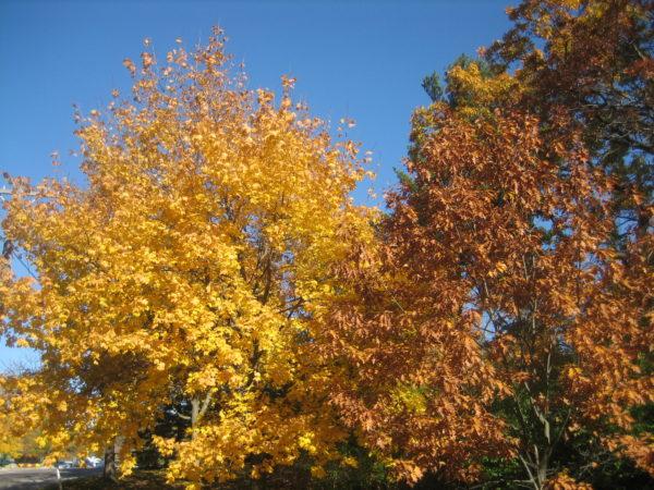 vancouver-toronto-fall-colors-2016-036