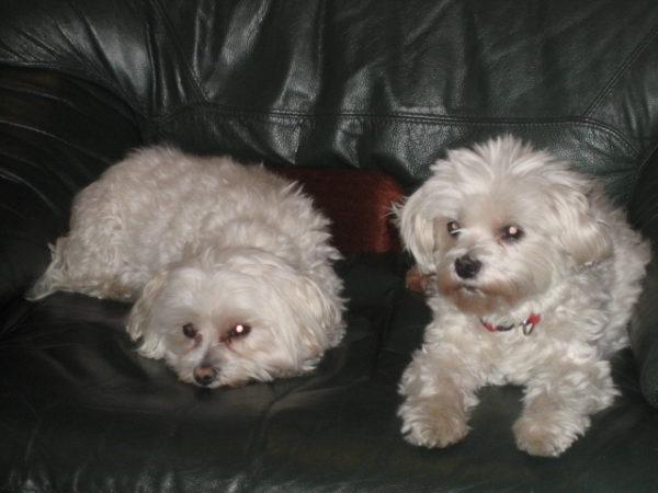 Elmo, left, and Pablo