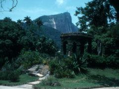Rio's Splendid Botanical Garden