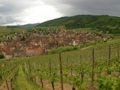 Alsace's Delightful Wine Route